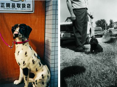 "Left to right: William Eggleston, Untitled (Statue of Spotted Dog), 2001, color photograph, 40 x 30"". William Eggleston, Untitled (Memphis, Tennessee), 1965, black-and-white photograph, 10 x 8""."