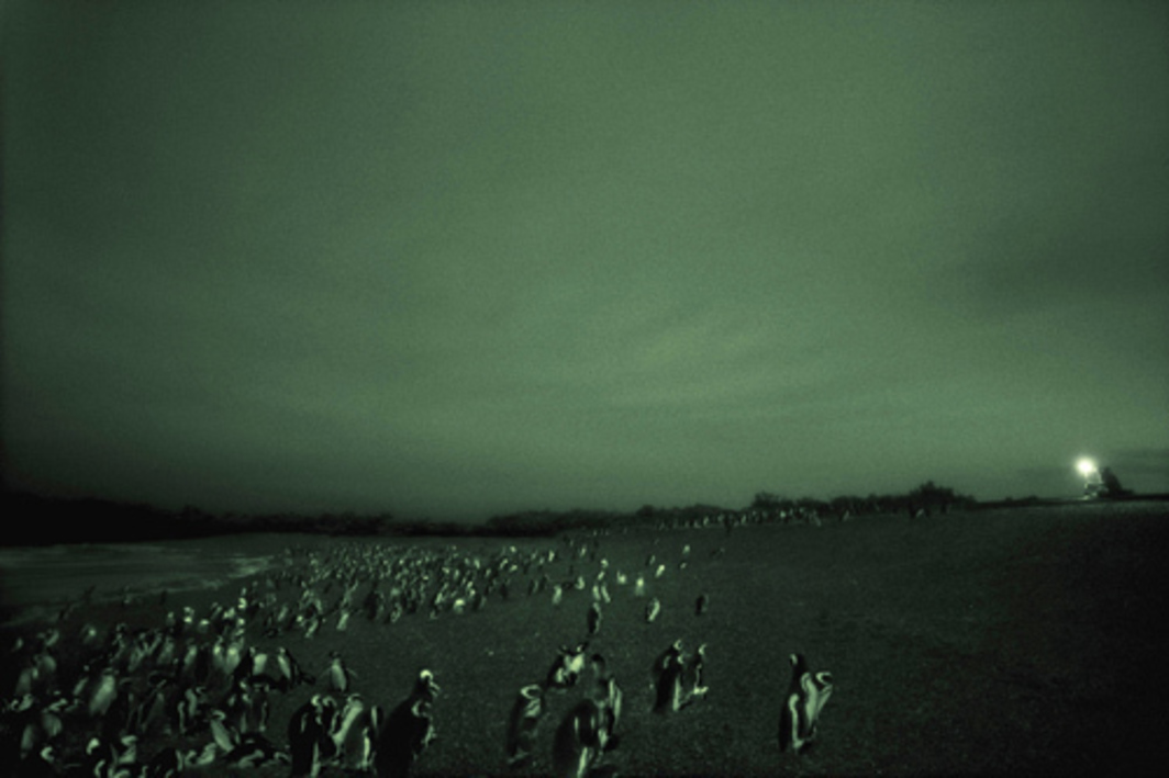 "Philippe Parreno, Speaking to the Penguins, 2007, infrared photograph mounted on aluminum, 52 3/8 x 78 3/4""."