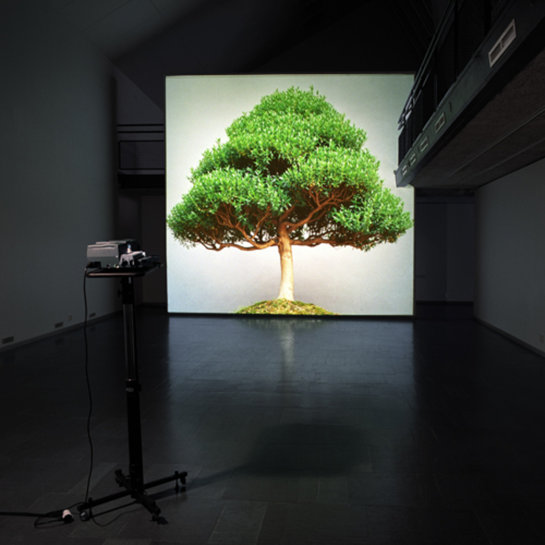 Ceal Floyer, Overgrowth, 2004, medium-format slide, medium-format slide projector, dimensions variable.