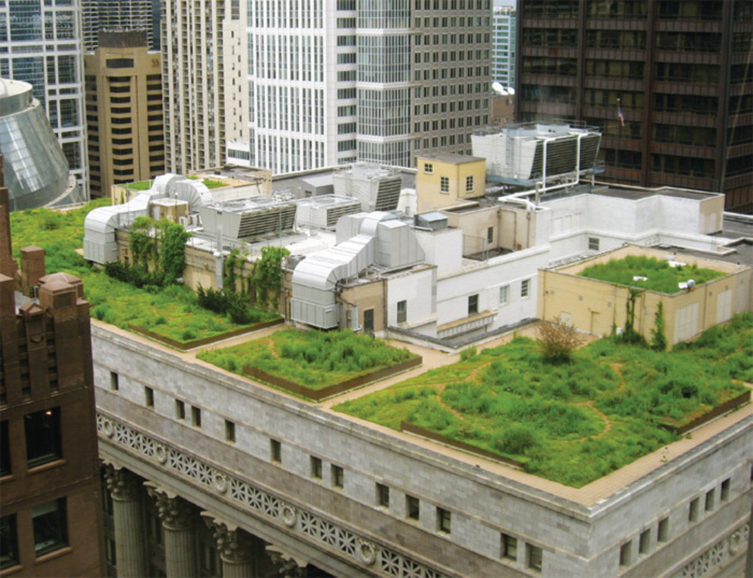 *Green roof of city hall, Chicago, 2009.* Photo: Jennifer Roberts.
