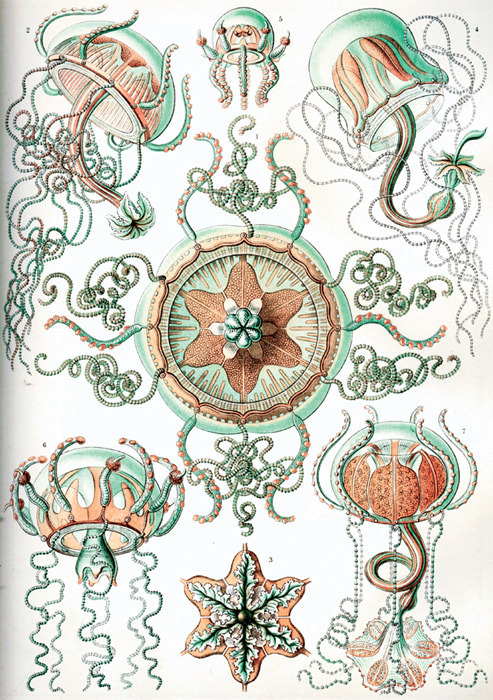 "Ernst Haeckel's Kunstformen der Natur (Art Forms of Nature), 1899–1904. From ""Atlas—How to Carry the World on One's Back?,"" 2011. ZKM Museum für Neue Kunst, Karlsruhe, Germany."