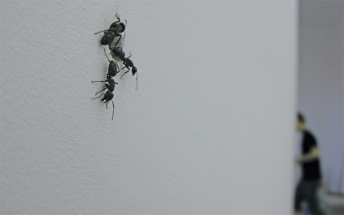 Pierre Huyghe, Umwelt (Environment) (detail), 2011, ants, spiders, dimensions variable.