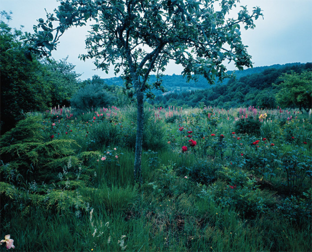 "Jean-Luc Moulène, untitled, 1992, color photograph, 47 1/4 x 61"". All works from the suite M. Chaudun's Garden, 1991–2006, from the series ""Fénautrigues,"" 1991–2006."