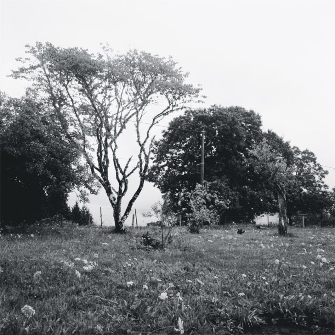 "Jean-Luc Moulène, untitled, 2006, black-and-white photograph, 55 1/8 x 55 1/8""."