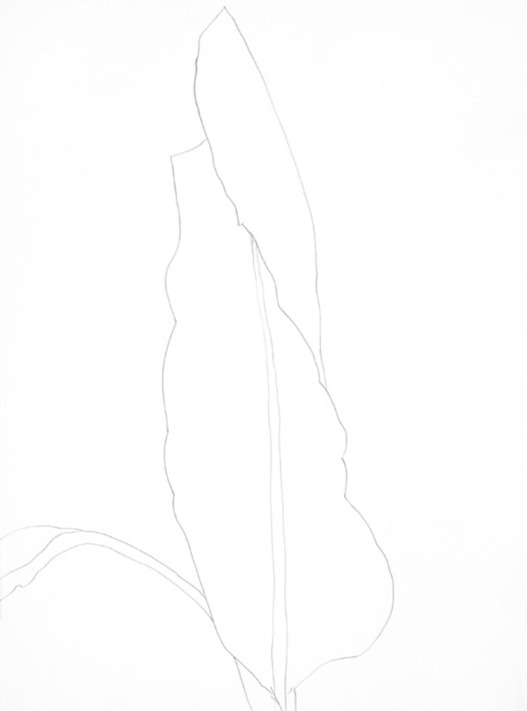 Ellsworth Kelly Plant Drawings At The Metropolitan Museum
