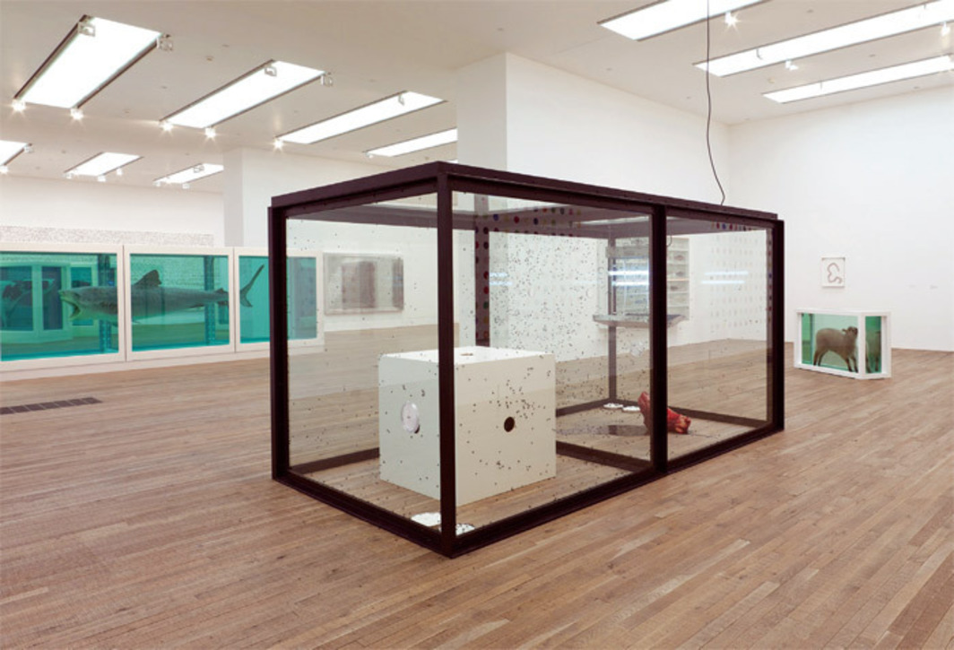 "View of ""Damien Hirst,"" 2012. Floor, from left: The Physical Impossibility of Death in the Mind of Someone Living, 1991; A Thousand Years, 1990; Away from the Flock, 1994. Walls, from left: Lullaby, the Seasons, 2002; Isolated Elements Swimming in the Same Direction for the Purpose of Understanding (Right), 1991; 11 Sausages, 1993. Photo: Prudence Cuming Associates."