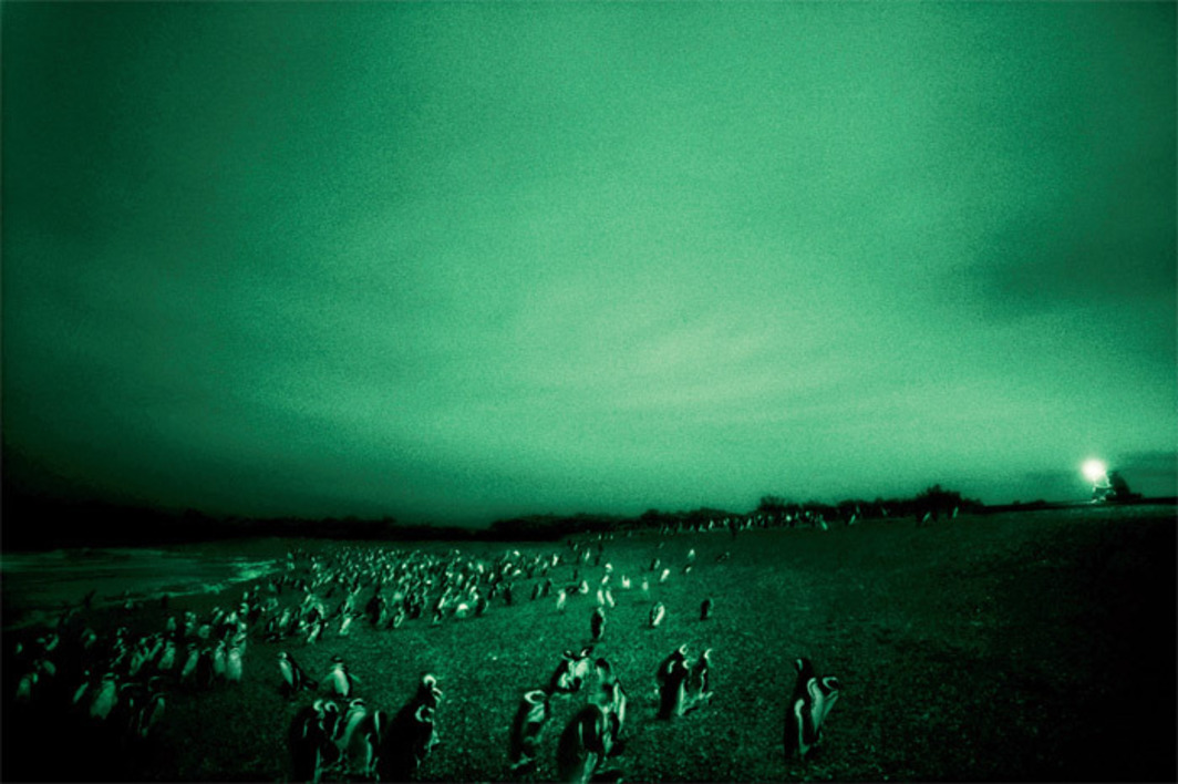 "Philippe Parreno, Speaking to the Penguins, 2007, color silver print, 59 1/8 x 89 3/8""."
