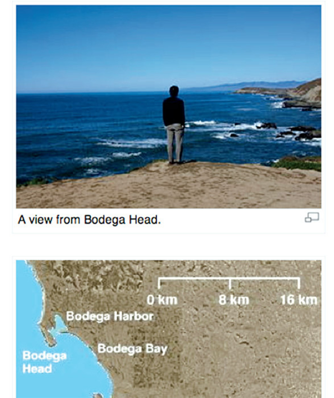 "Detail of Wikipedia's ""Bodega Head"" article with a photograph from David Horvitz's Public Access, 2010–11."