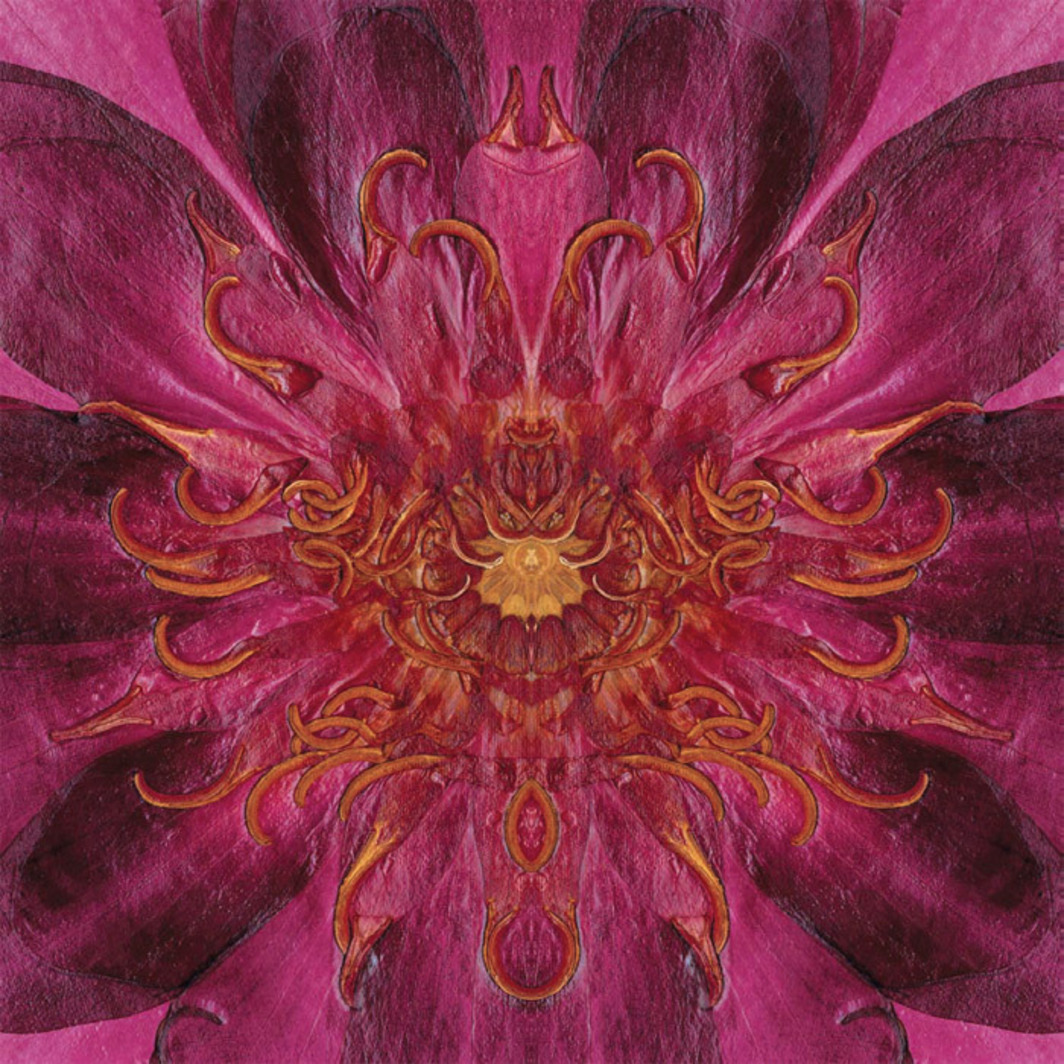 "E. V. Day, Water Lily, 2010–11, digital composite on photographic paper, 72 x 72"". From the series ""Seducers,"" 2010–11."