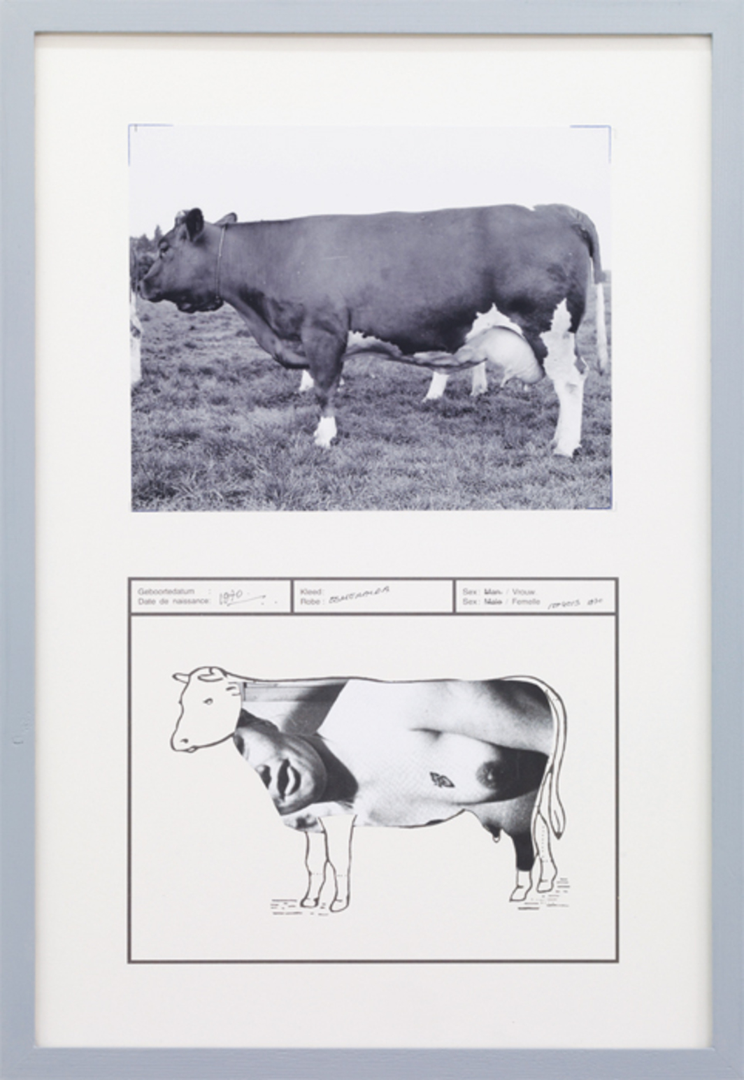 "Jef Geys, Esmeralda, 1970, ink, colored pencil, black-and-white C-print, offset print, 26 x 17 5/8"". From the series ""Passeports de vaches"" (Cow Passports), 1965–."