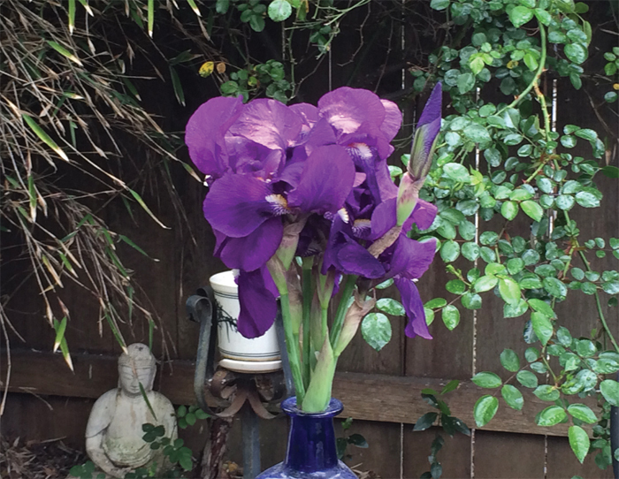 *Irises in the author's garden.* Photo: Kim Stanley Robinson.