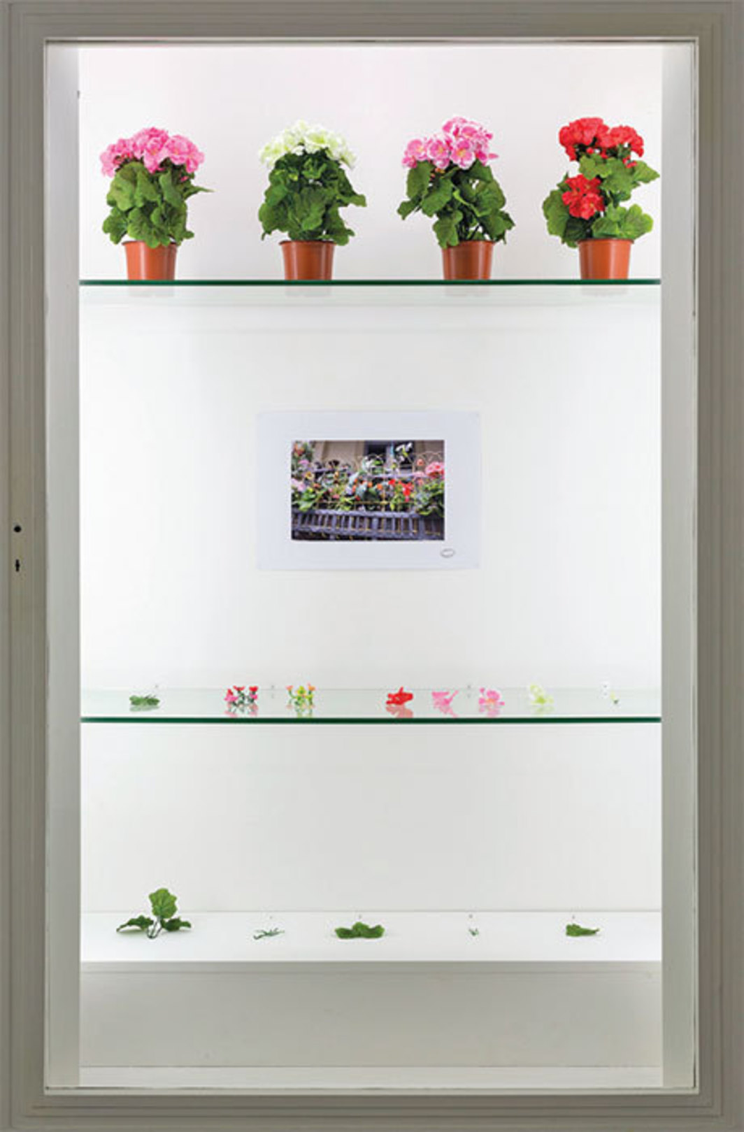 Alberto Baraya, Expedition Berlín, Herbarium of Artificial Plants (detail), 2013–, mixed media, dimensions variable.