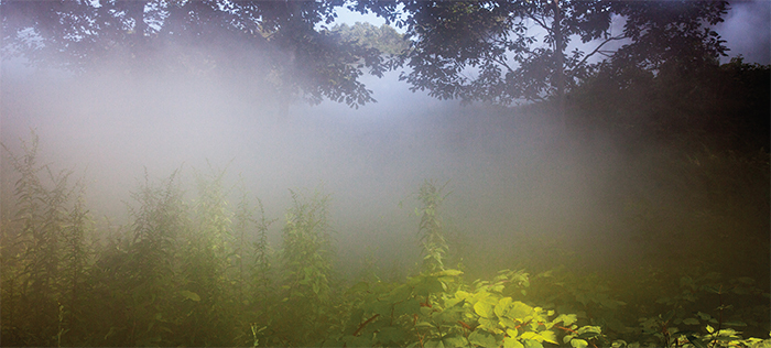 Fujiko Nakaya, Veil, 2014, fog. Installation view, Philip Johnson Glass House, New Canaan, CT. Photo: Richard Barnes.