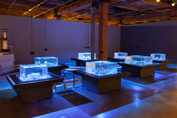 Glenn Kaino, Tank, 2014, dimensions variable. Installation view, Contemporary Arts Center New Orleans, 2014. From Prospect.3 New Orleans. Photo by Joseph Rynkiewicz.