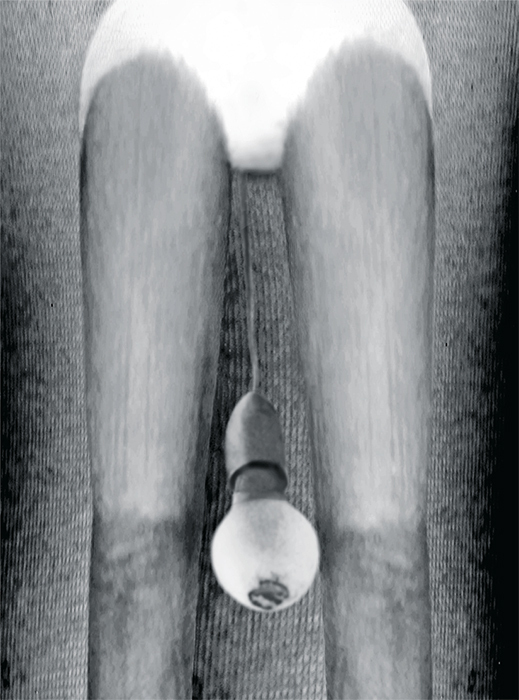 "Pat Brassington, Bayonet, 2013, ink-jet print, 39 3/8 × 29 1/8""."