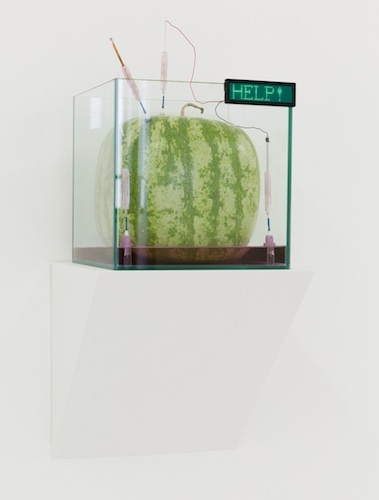 "Max Hooper Schneider, Genus Watermeloncholia, 2014, bioengineered square watermelon, glass cube aquarium, UV electrolyte bath, soil, actinic light fixture, plastic ports, copper wire, battery operated digital sign, 10"" x 10"" x 10""."
