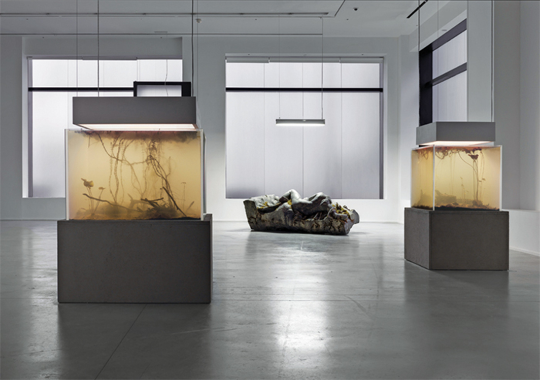 "View of ""Pierre Huyghe,"" 2014. From left: Nymphéas Transplant (14–18), 2014; La déraison, 2014; Nymphéas Transplant (12.21.1914), 2014."
