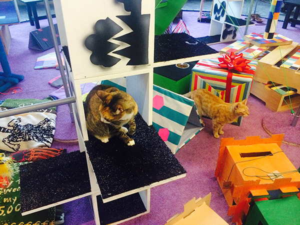 The Cats-in-Residence Program at 356 S. Mission Road. (All photos: Paige Bradley)