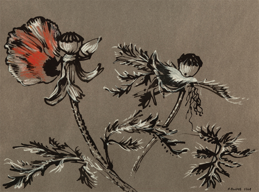 "Peter Blume, Poppies #1, 1964, ink and chalk on colored paper, 9 3/4 × 13""."