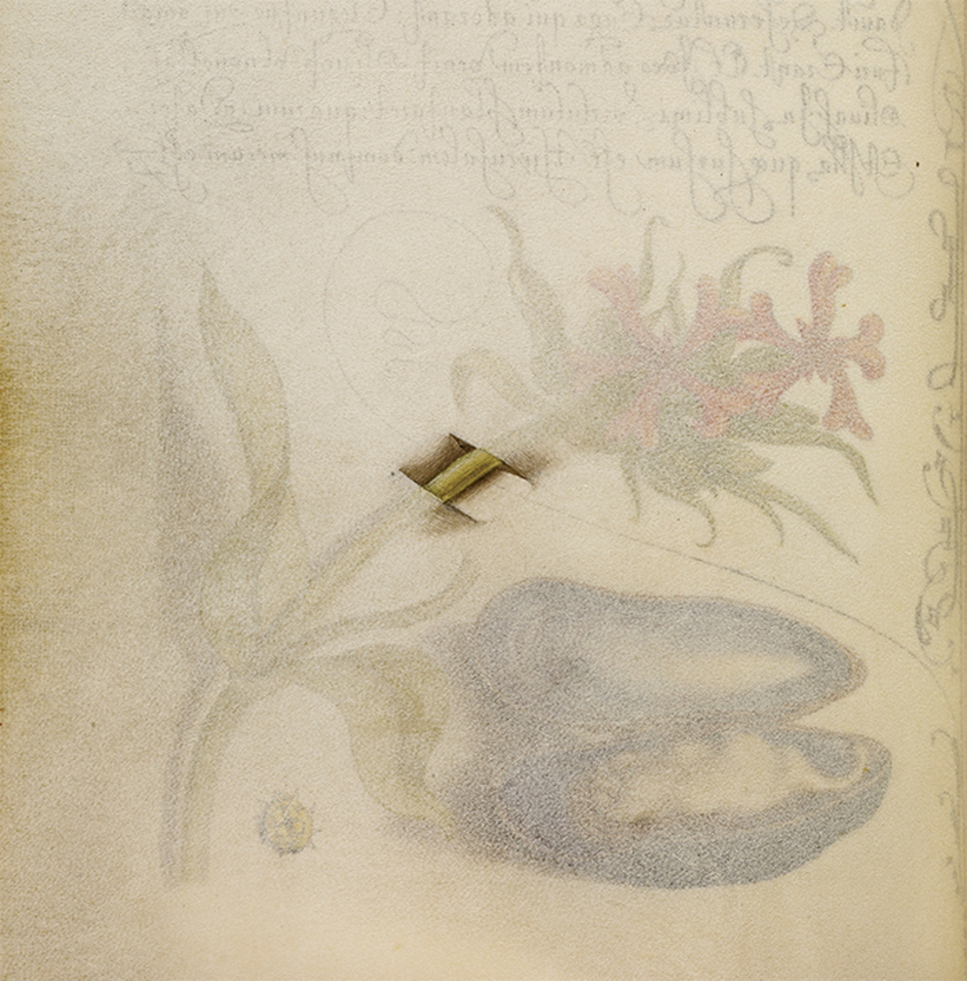 "Joris Hoefnagel, Maltese cross, mussel, and ladybird (detail), 1591–96, watercolor, gold and silver paint, and ink on parchment, 6 5/8 x 4 7/8"". Verso of a page from Mira calligraphiae monumenta, 1561–96. Photo: The Getty Center, Los Angeles/Open Content Program."