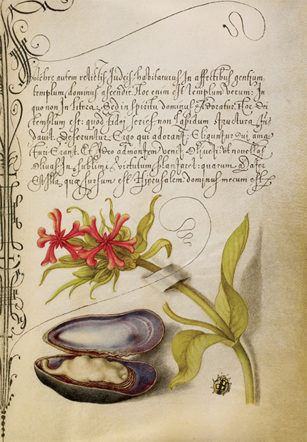 "Joris Hoefnagel, Maltese cross, mussel, and ladybird, 1591–96, watercolor, gold and silver paint, and ink on parchment, 6 5/8 x 4 7/8"". Page from Mira calligraphiae monumenta, 1561–96. Calligraphy by Georg Bocskay. Photo: The Getty Center, Los Angeles/Open Content Program."