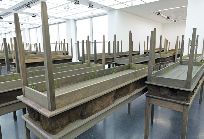 Doris Salcedo, Plegaria Muda (Silent Prayer), 2008–10, wood, concrete, earth, grass. Installation view.