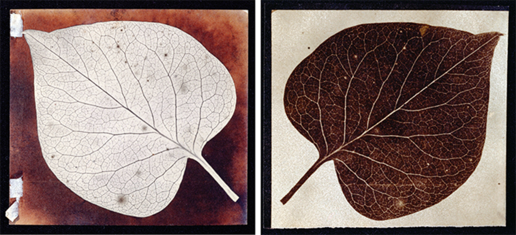 "From left: William Henry Fox Talbot, A Leaf, ca. 1840, photogenic-drawing negative, 3 3/4 × 3 3/8"". William Henry Fox Talbot, A Leaf, ca. 1840, salted paper print, 3 5/8 × 3 3/8""."