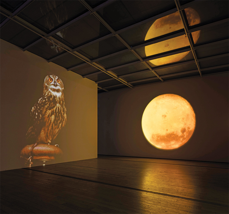 Diana Thater, A Cast of Falcons (detail), 2008, four video projectors, computer, two spotlights. Installation view. Photo: Fredrik Nilson.