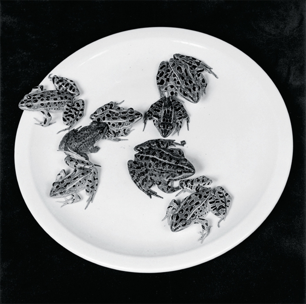 "Robert Mapplethorpe, Frogs, 1984, gelatin silver print, 20 × 16"". © Robert Mapplethorpe Foundation."