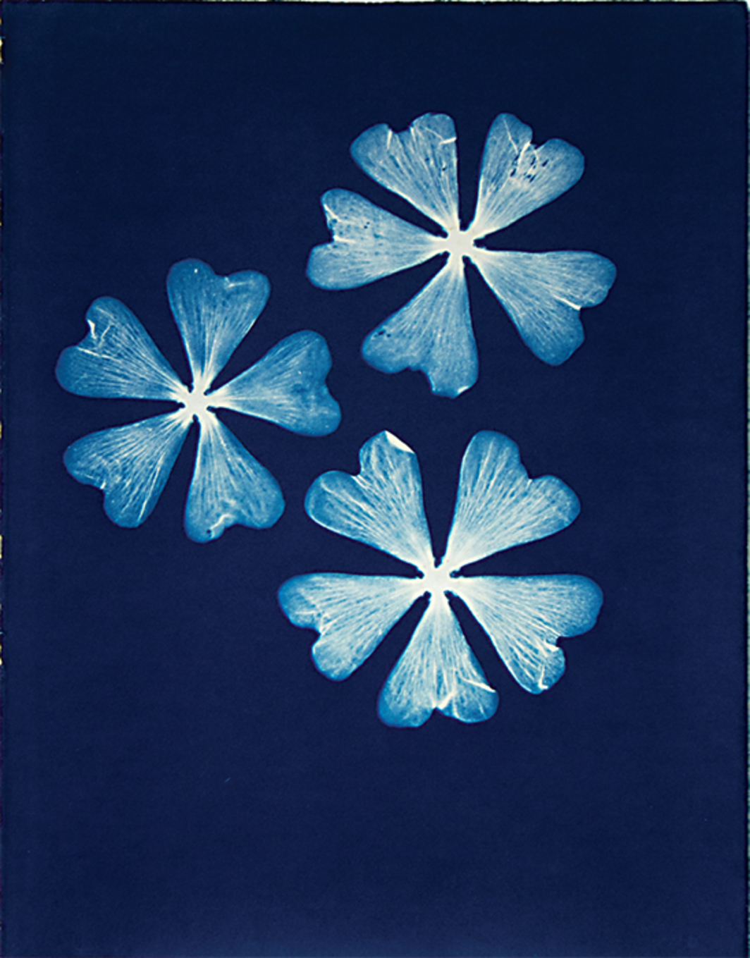 "Pipo Nguyen-duy, Untitled F40, 1998, cyanotype, 15 × 11 1/2""."