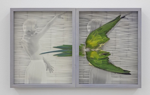 "Jonah Samson, Untitled (Parakeet), 2017, diptych of ink-jet prints with parakeet feathers, 10 x 17""."