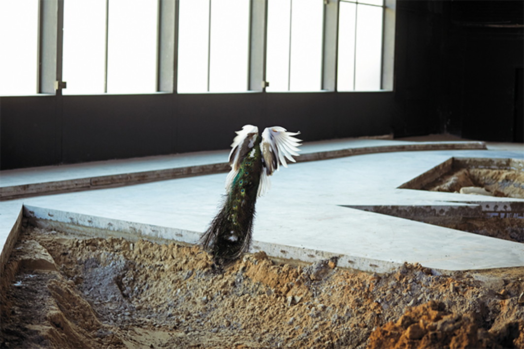 Pierre Huyghe, After ALife Ahead, 2017, concrete ice-rink floor, sand, clay, phreatic water, bacteria, algae, bees, chimera peacocks, aquarium, black switchable glass, textile cone, incubator, human cancer cells, genetic algorithm, augmented reality program, automated ceiling structure, rain, ammoniac, logic game. Installation view. From Skulptur Projekte Münster. Photo: Ola Rindal.
