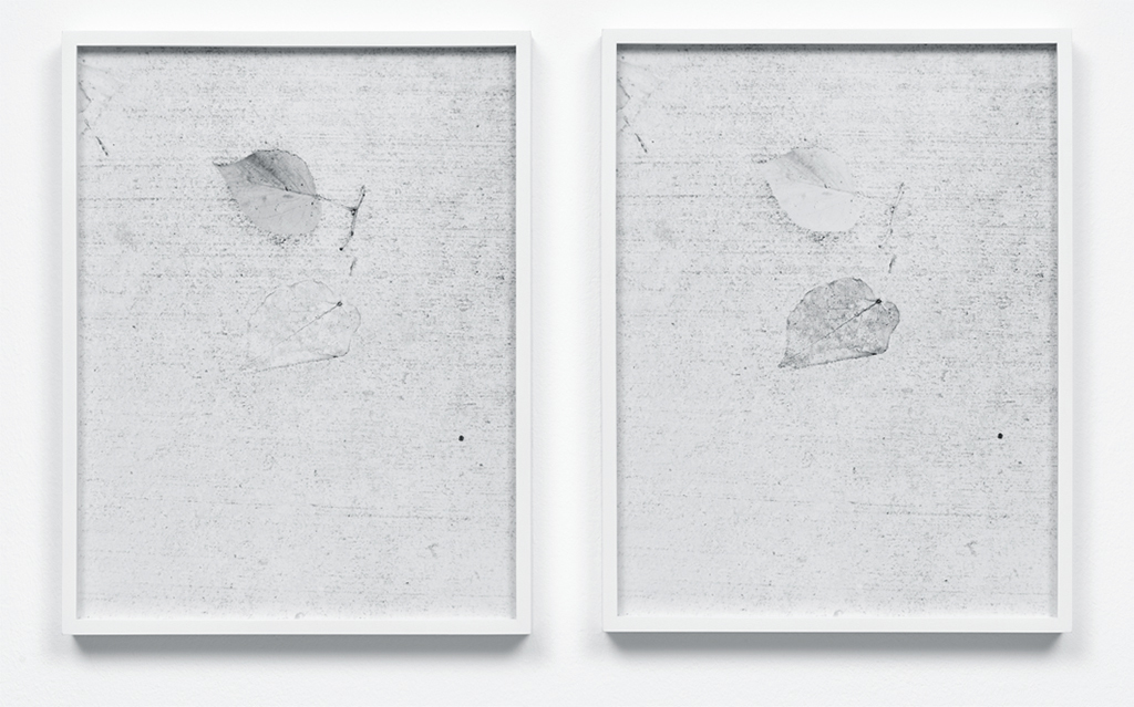 "Johanna Jaeger, sidewalk fossil (brooklyn), 2017, two C-prints, each 12 3/8 x 9 5/8""."