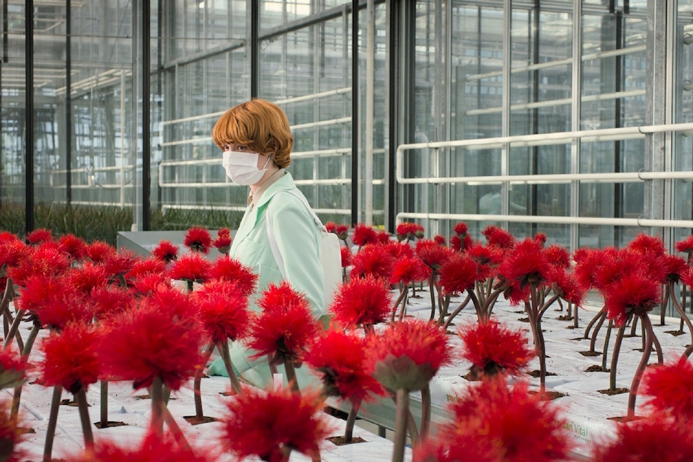 Jessica Hausner, Little Joe, 2019, DCP, color, sound, 105 minutes. Alice Woodard (Emily Beecham.)