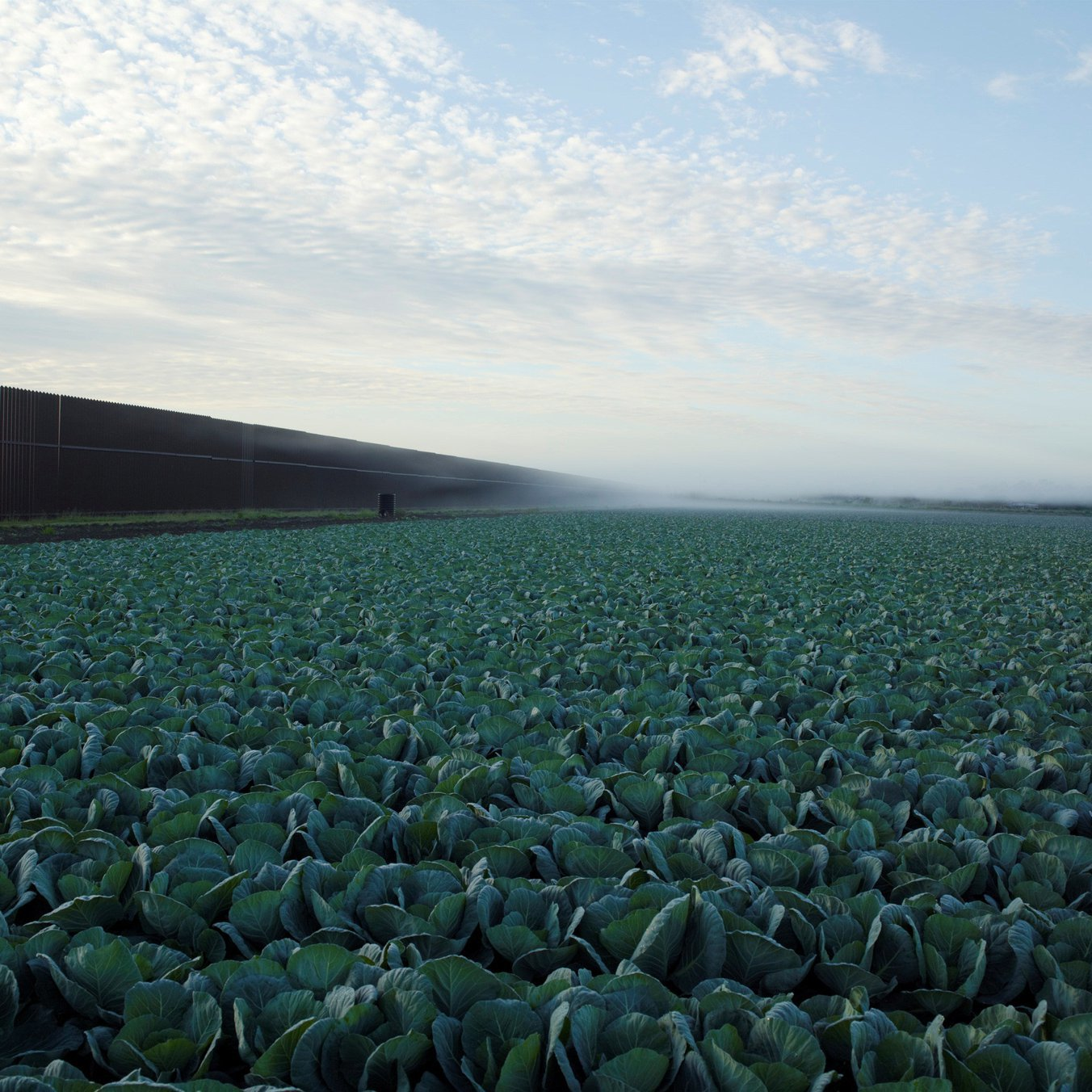 Richard Misrach, Cabbage Crop Near Brownsville, Texas, 2015. Courtesy of Pace.