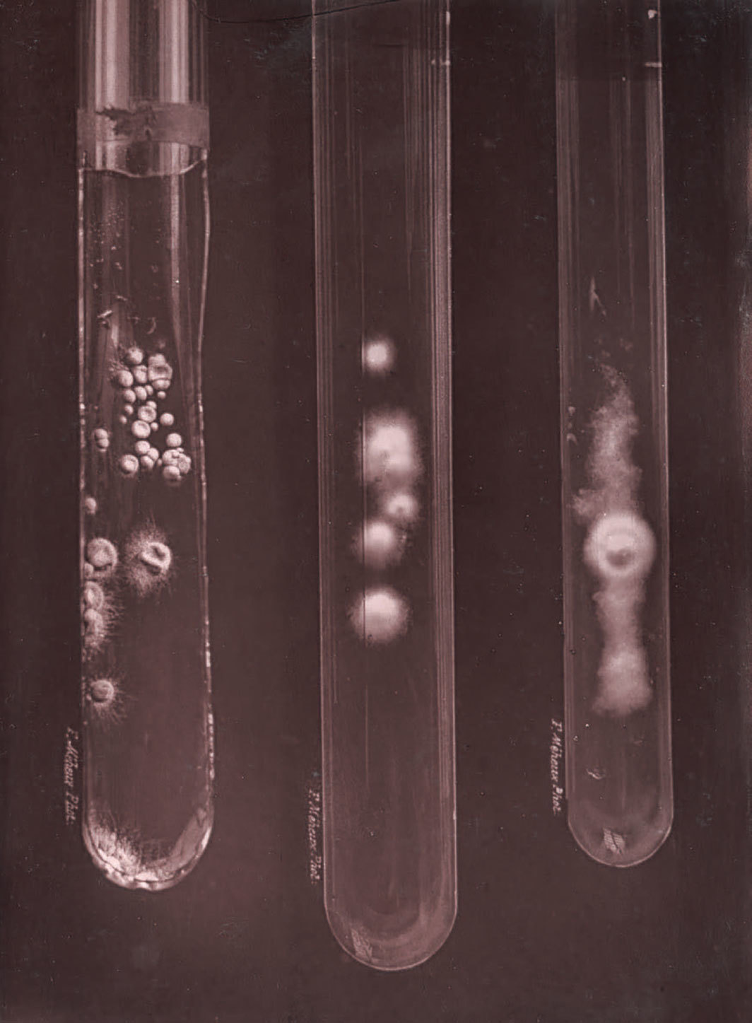 Culture specimens, Pasteur Institute, Paris, 1887. Photo: adoc-photos/Corbis/Getty Images.