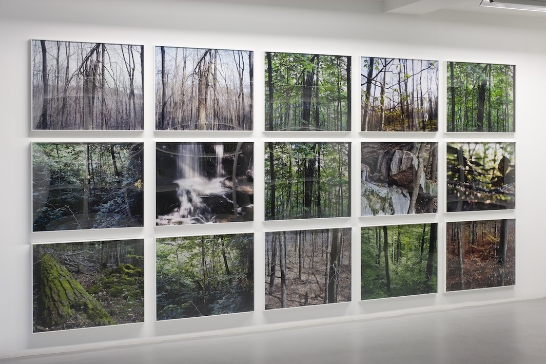 Joseph Bartscherer, Forest (detail), 1999–2005. Installation view, Galerie Philip Nelson, Paris, 2006. Photo: Florian Kleinefenn.